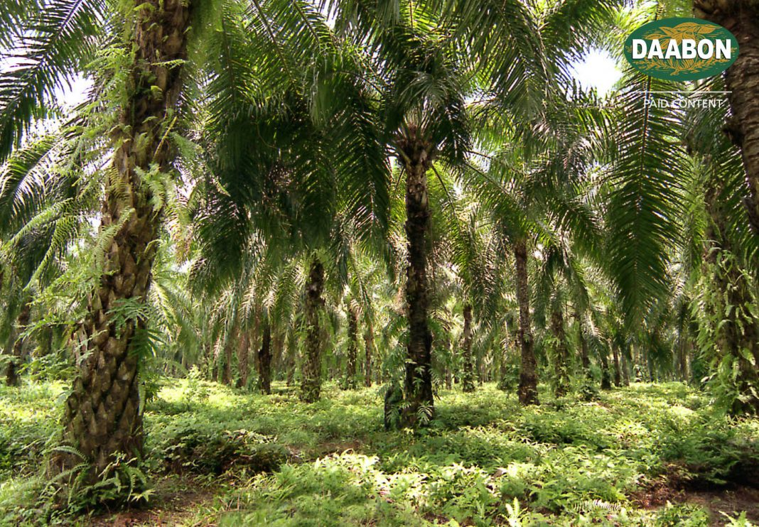Daabon Supports Biodiversity With Sustainable Palm Oil