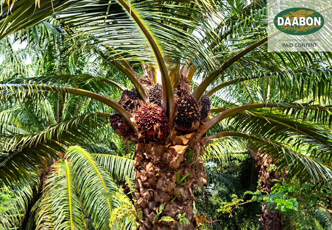 Sustainable Palm Oil Efforts
